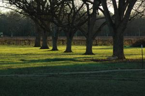 Pecan Orchard, Grape Vineyard