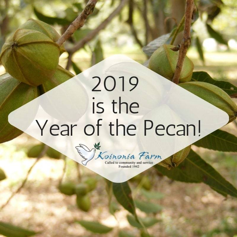 2019 is the Year of the Pecan at Koinonia Farm