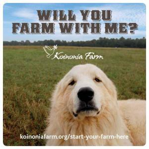 "Dog in a pasture with text ""Will you Farm with Me?"""