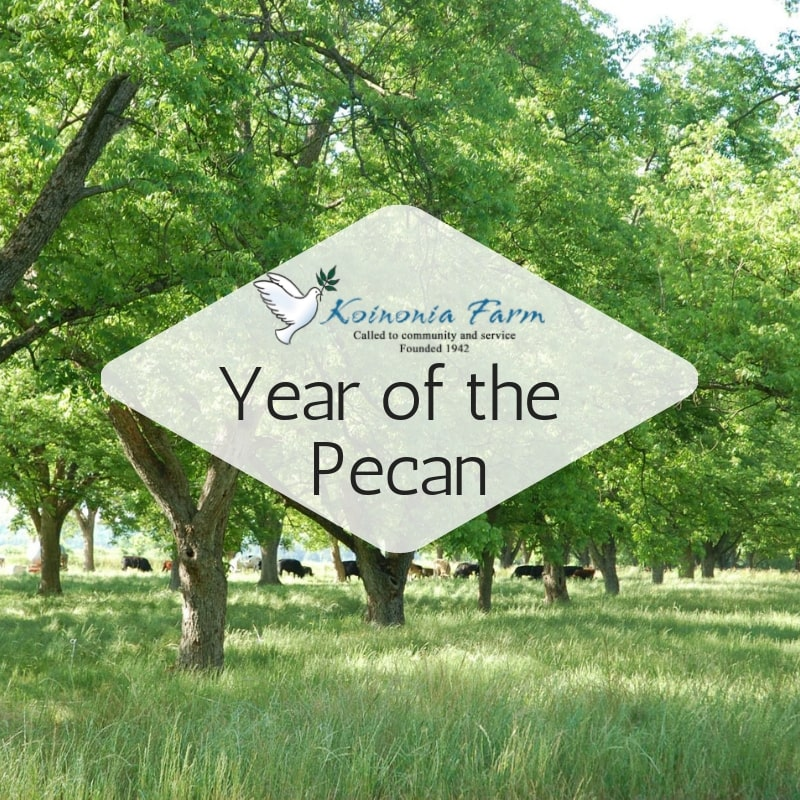 Koinonia Farm's Year of the Pecan