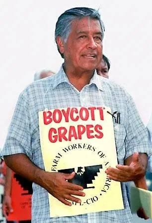 César Chávez with Boycott Grapes sign