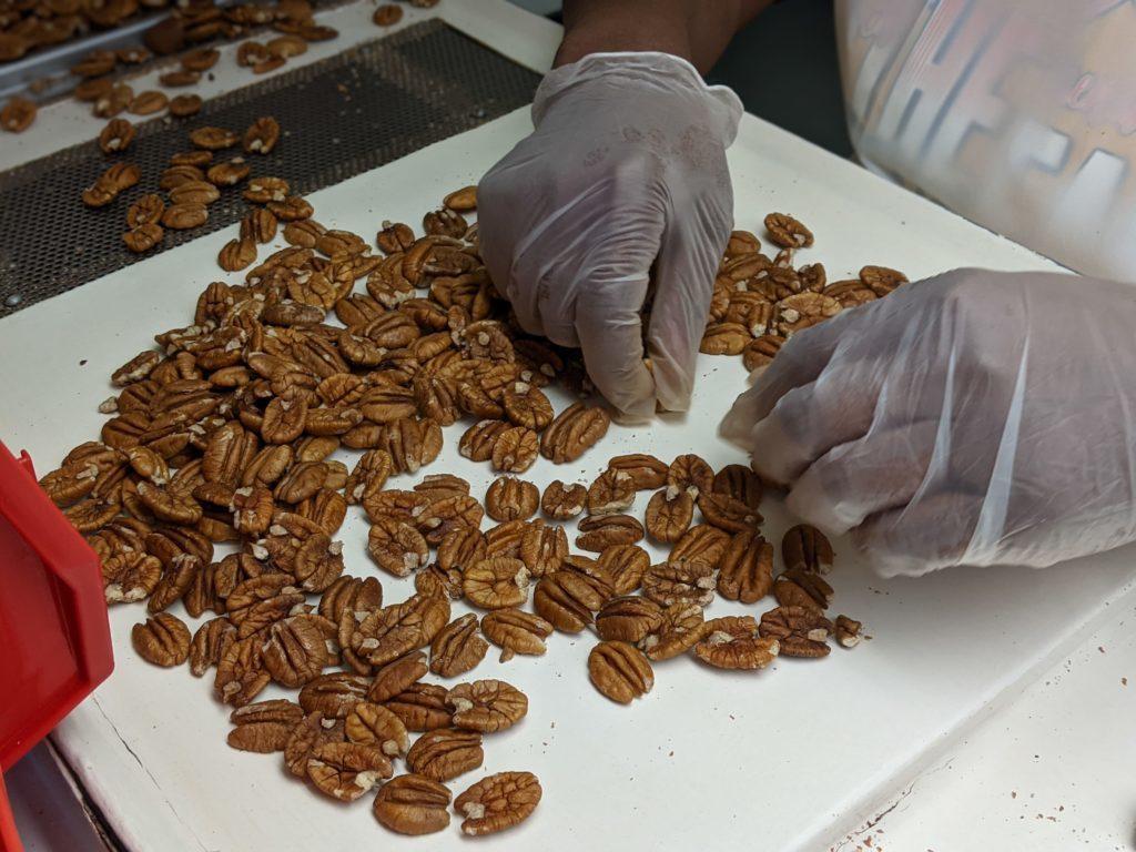 Hands Sorting Pecans