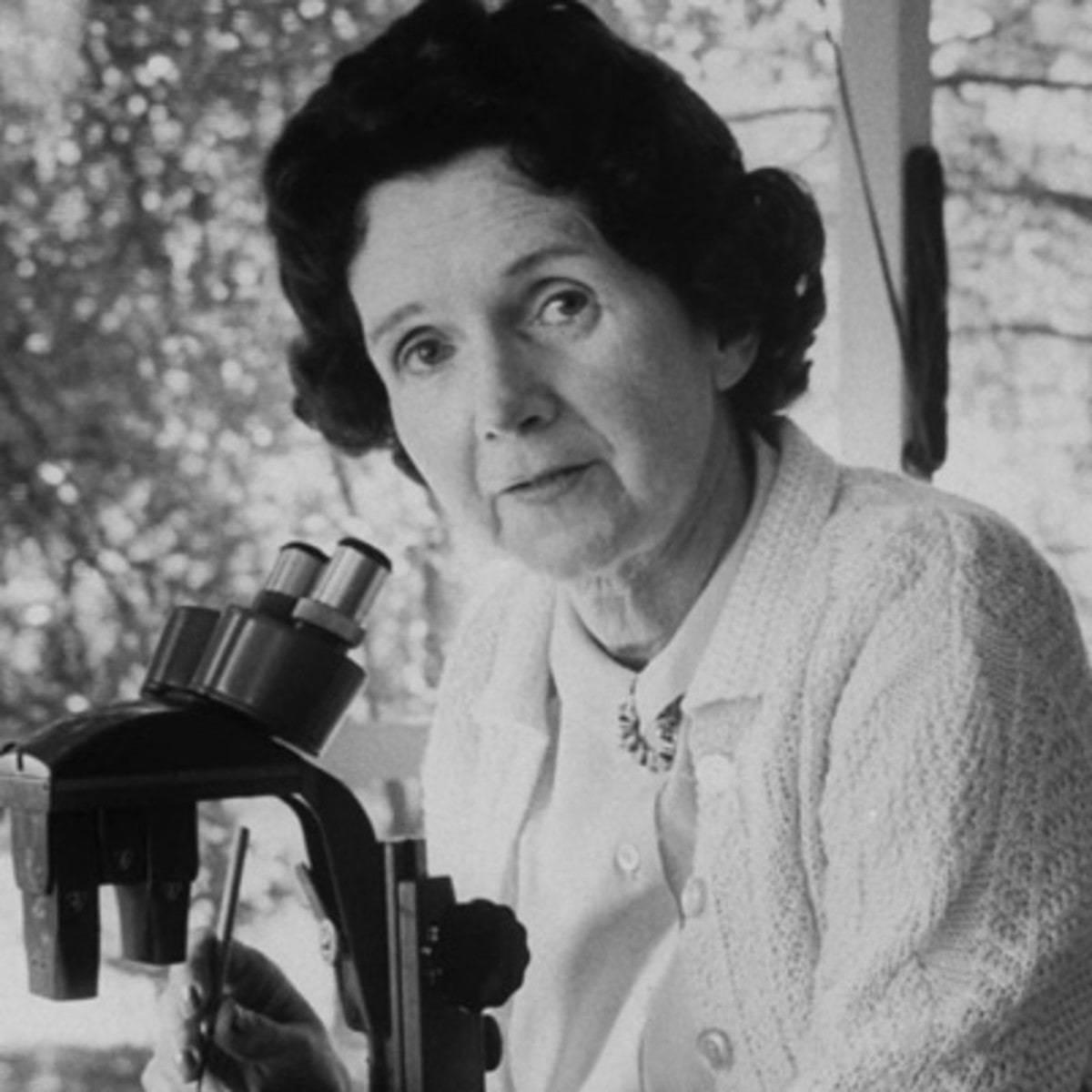 Rachel Carson and microscope